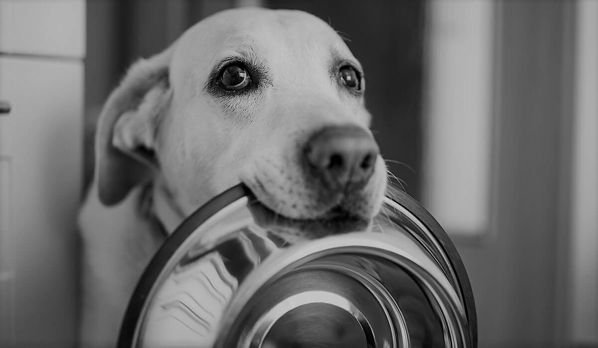 hungry dog holding an empty bowl